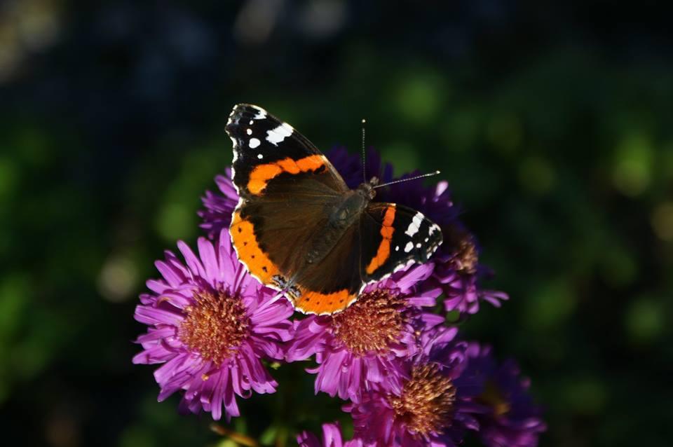 Blomst med sommerfugl