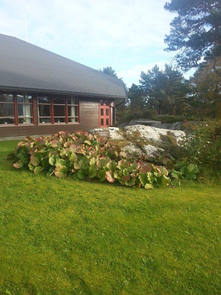 Hagen gress og hus